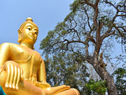 Храм Ват Ко Яй, провинция Самут Сонгкрам (Samut Songkhram)