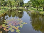 Парк Cha Am Forest Park