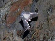 Пещера Bat cave в 2 часах езды от Хуа Хина