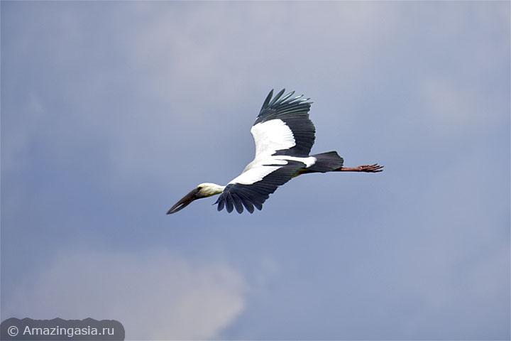 Птицы национального парка Кхао Сам Рой Йот