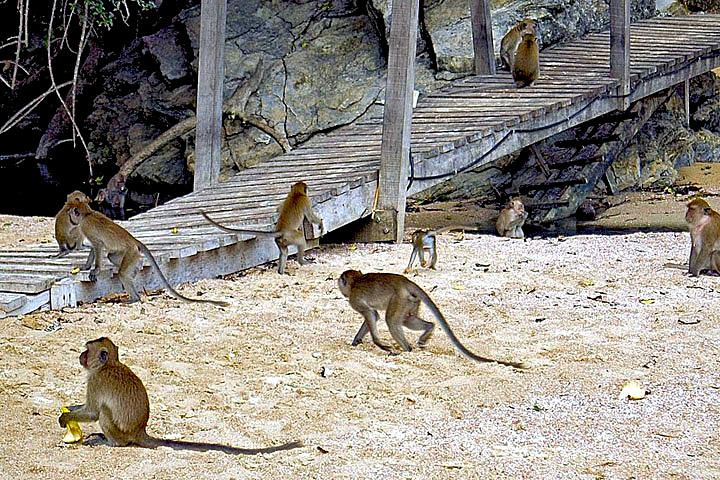 Фотографии Ао Нанга. Мартышки в районе Monkey trail.