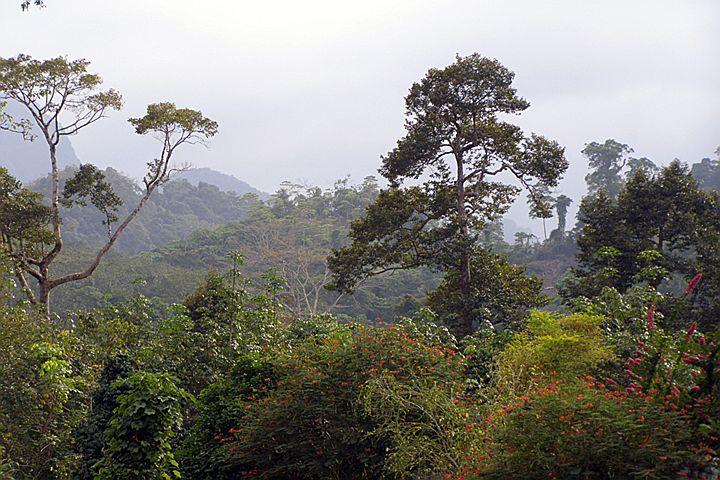Дорога в Као Сок (Khao Sok)
