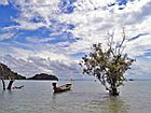 Лодка среди мангровых зарослей
