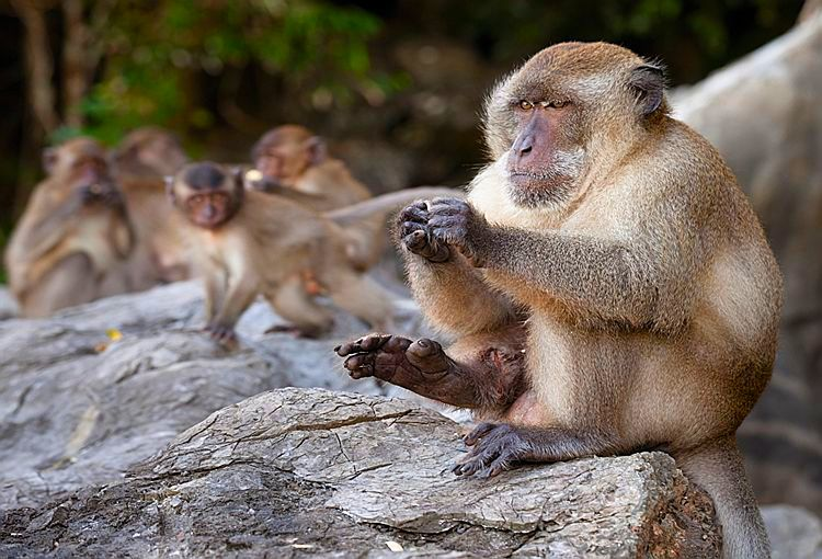Фото обезьян на пляже 23