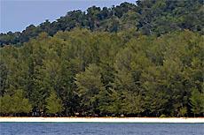 Остров Аданг (Koh Adang)