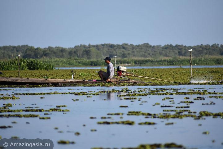 Thale Noi lake, Phattalung, Thailand