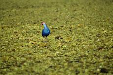 Фото озера Тале Ной (Thale Noi)