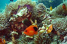 Подводный мир островов Бида (Bida), Пи Пи (Phi Phi)