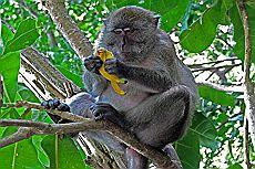 Фото обезьян на пляже 72