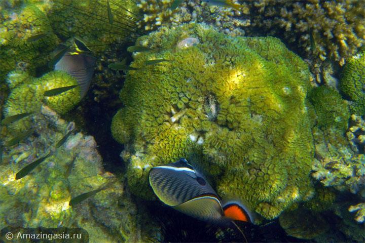 Снорклинг на островах Транг. Кораллы острова Крадан.